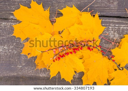 Autumn background/ Autumn leaves and berry over wooden background/Thanksgiving day concept
