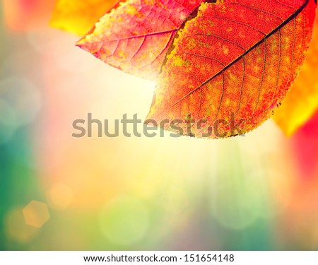 Autumn Background. Beauty Colorful Leaves and Sun Light. Fall. Yellow, Orange, Red and Green Colors. Colorful Abstract Nature Background - stock photo