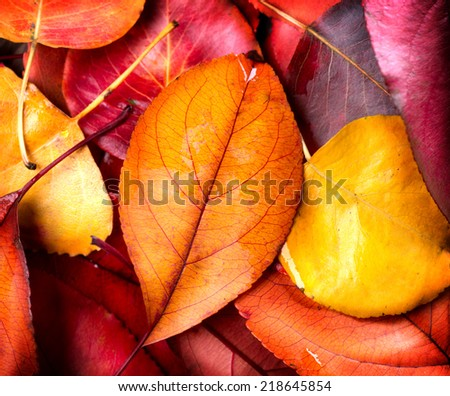 Autumn background. Colorful leaves Autumnal design - stock photo