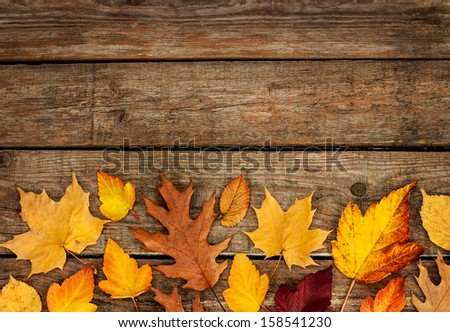 Autumn background - different shaped leaves on wooden board - free text space - stock photo