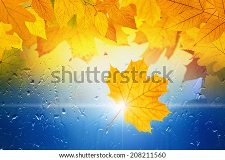 Autumn background - falling maple and oak leaves, window glass with rain drops, rainy day, season is fall - stock photo
