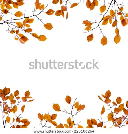 Autumn background frame. Yellow leaves on the branches isolated on white