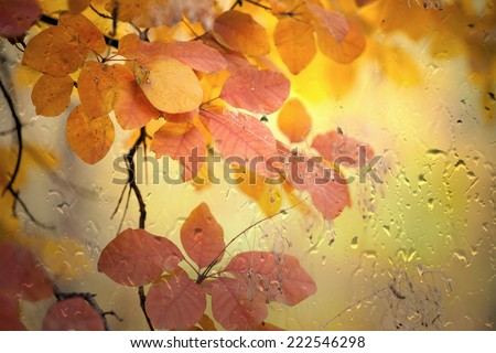 Autumn background - leaves outside window glass with rain drops, rainy day, season is fall - stock photo