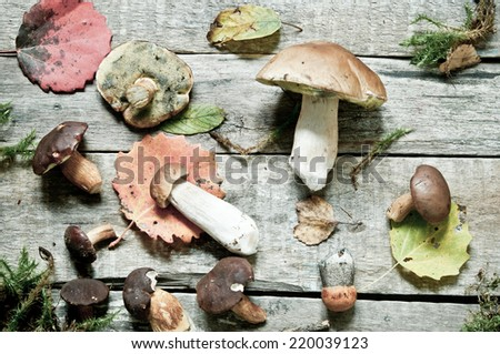 Autumn background/Mushrooms on a wooden surface
