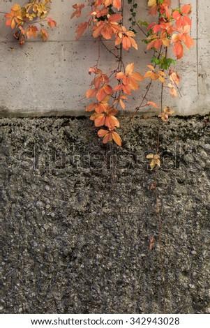 Autumn background wall - stock photo