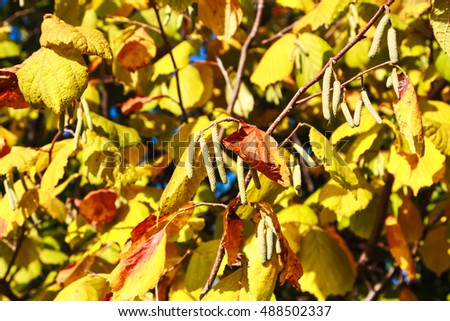 Autumn background with branches and leaves