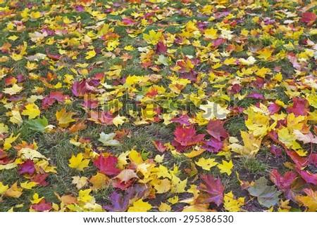 Autumn background with bright foliage - stock photo