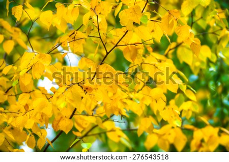 autumn background with colored leaves, nature series - stock photo