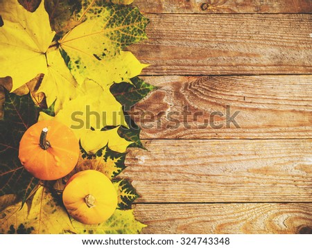 Autumn background with colorful leaves and pumpkins on rustic wooden board. Thanksgiving and Halloween holidays concept. Harvest rural fall season. Space for your text. - stock photo