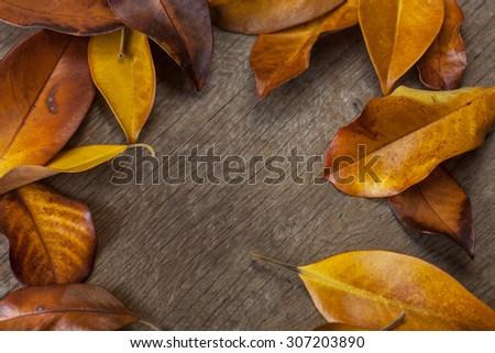 autumn background colorful yellow orange leaves stock photo royalty