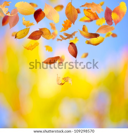 Autumn background with different falling leaves and copy space - stock photo