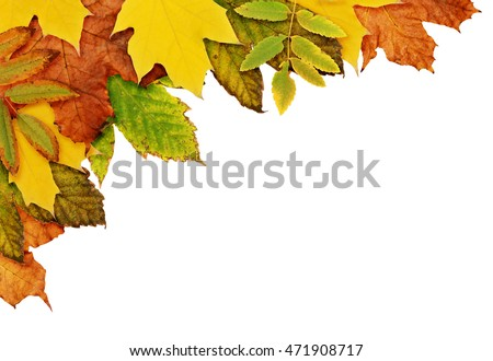 Autumn background with dried leaves in yellow, orange and green colors in a corner isolated on white