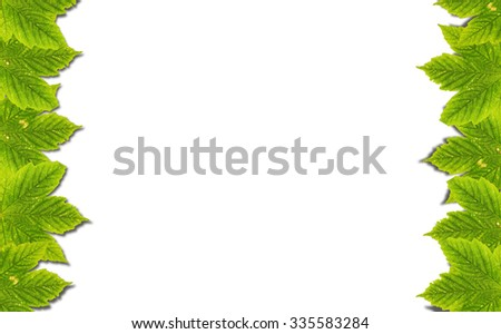 Autumn background with green leaves isolated on white