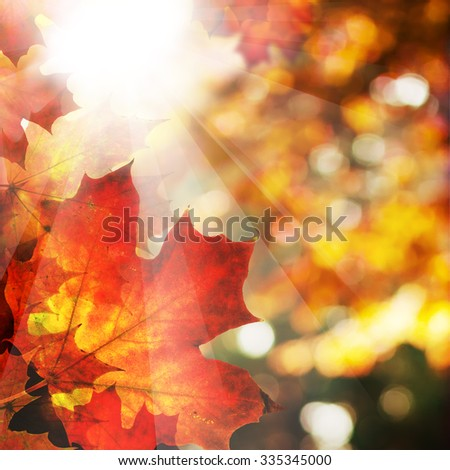 Autumn Background with Maple Leaves. Abstract Fall Border with Sun Light