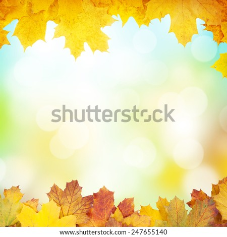 Autumn background with maple leaves and sunny bokeh - stock photo