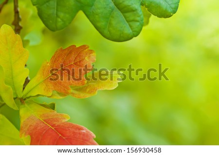 Autumn background with red oak leaf and copy space,  selective focus - stock photo