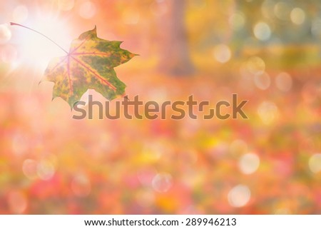 autumn background with single leaf