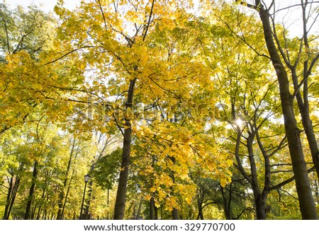Autumn background with trees/toned photo