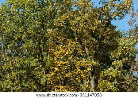 Autumn background with yellow and green leaves for backdrop - stock photo