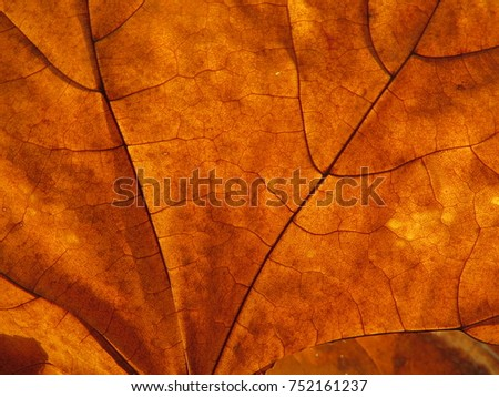 Autumn beautiful background . Maple leaves close-up.Retro defocused  photo. Yellow maple leaves.