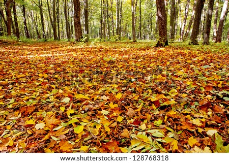 autumn beautiful view of the park forest and mountain brook. wood backgrounds - stock photo