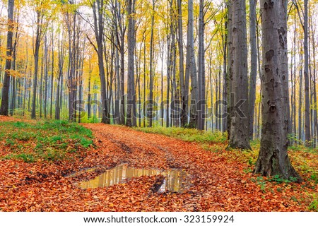 Autumn beech fall forest in Bukk-Hungary - stock photo