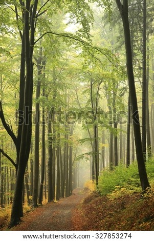 Autumn beech forest with mist in the distance. - stock photo