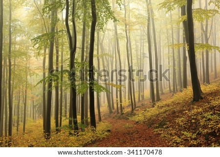 Autumn beech forest with mist in the distance - stock photo