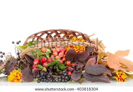 Autumn berries, flowers and leaves in a basket isolated on white background. - stock photo