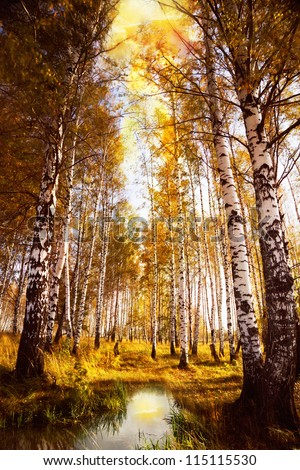 Autumn birch forest in sunlight near a  river in the morning - stock photo