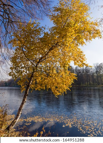 Autumn birch on the lake in a sunny day