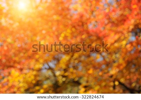 Autumn blurred sunny background. - stock photo
