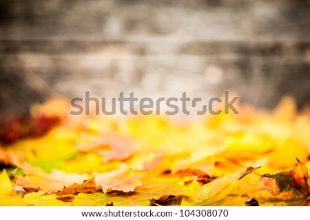 Autumn border from yellow maple leaves on old wooden background. Very shallow depth of field - stock photo