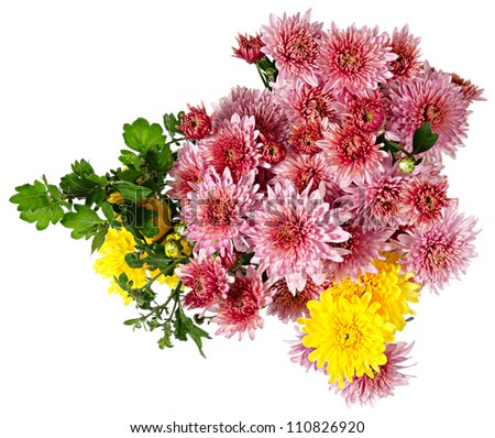 Autumn bouquet of flowers. Pink and yellow chrysanthemum
