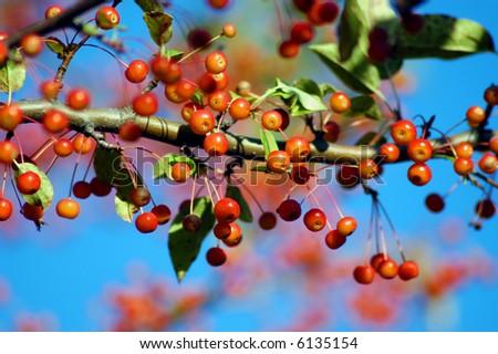 Autumn branches - stock photo
