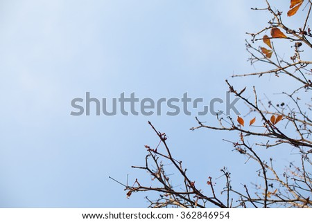Autumn Branches with Leaves with Copy space - stock photo