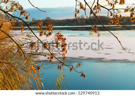 Autumn branches with reed. Frozen lake by sunny day.