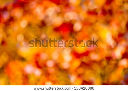 Autumn bright bokeh background. Natural beauty background.