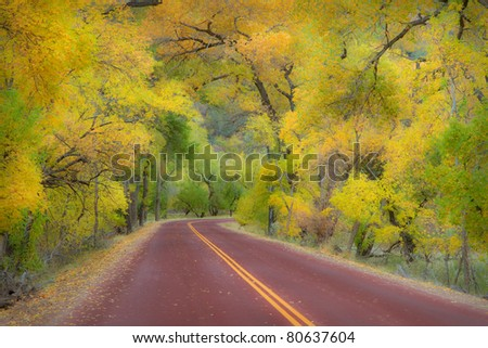 Autumn canopy of trees arching over road in Zion National Park - stock photo