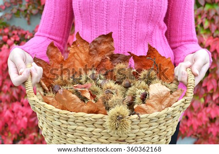 Autumn chestnuts and leaves - stock photo