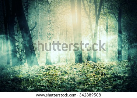 Autumn city park, trees in the glowing mist at night.