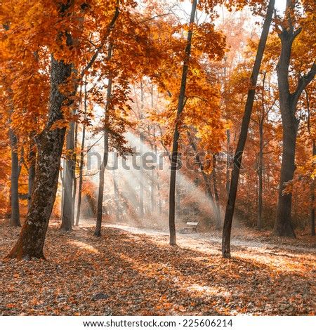 autumn city park with sunbeams - stock photo