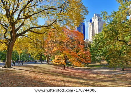 Autumn Color: Fall Foliage in Central Park, Manhattan New York  - stock photo