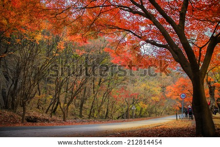Autumn color in Naejangsan national park, South korea - stock photo