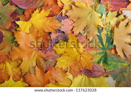 Autumn color leaf background - stock photo