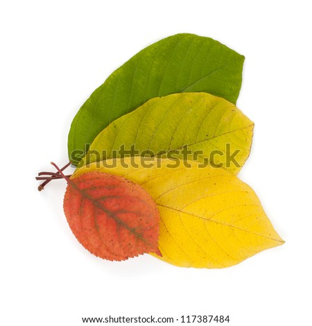 Autumn color leaves. Isolated on white background - stock photo