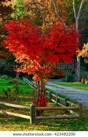 Red Japanese Garden Bridge beautiful japanese garden red bridge stock photo 153304361