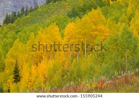 Autumn Color with Fall Foliage, Rocky Mountains, Colorado - stock photo