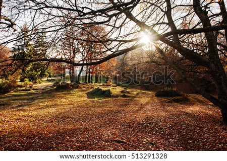 Autumn. Colored autumn view of autumn park in good weather. Picturesque view of autumn nature. Autumn landscape natural view