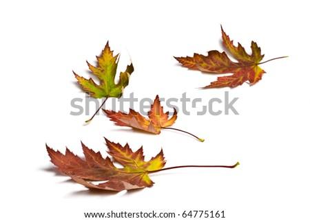 Autumn colored leafs - stock photo
